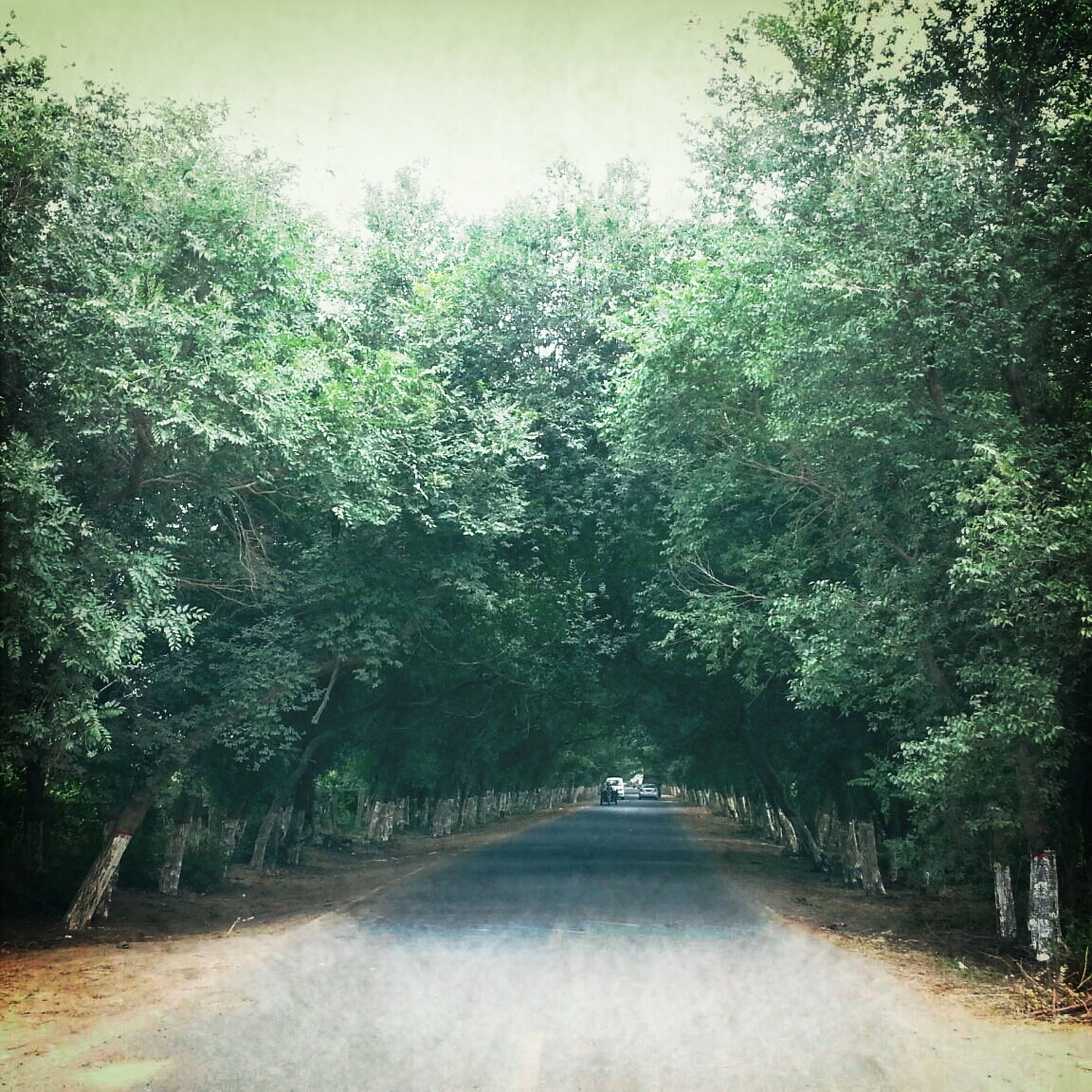 tree, the way forward, tranquility, tranquil scene, growth, nature, beauty in nature, scenics, road, diminishing perspective, dirt road, footpath, forest, vanishing point, branch, day, outdoors, idyllic, green color, non-urban scene