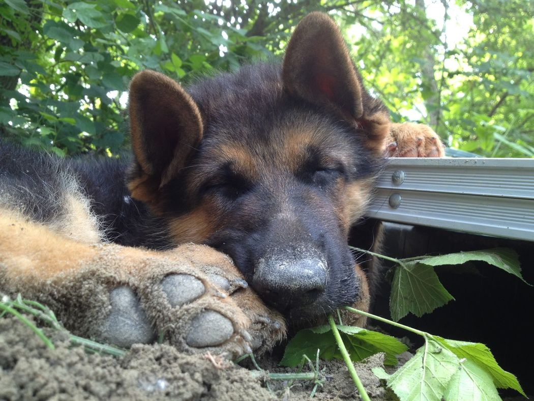 Adventure Animal Themes Day Dog Domestic Animals Dreaming German Shepherd Nature No People Non Urban Scene One Animal Outdoors Relaxing River Sleeping