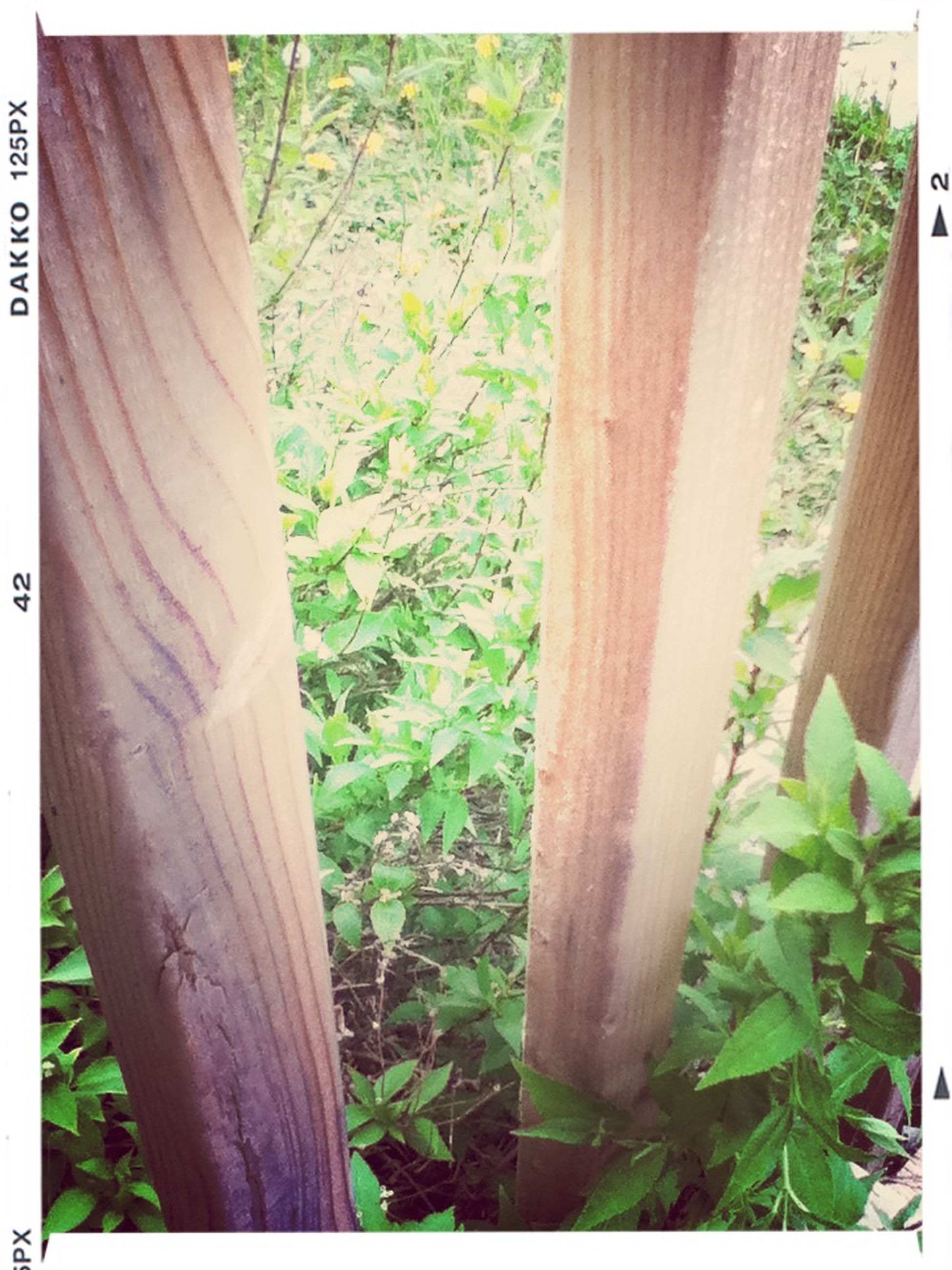 transfer print, wood - material, auto post production filter, growth, green color, tree trunk, plant, wooden, wood, tree, sunlight, nature, day, close-up, leaf, grass, outdoors, fence, green, no people