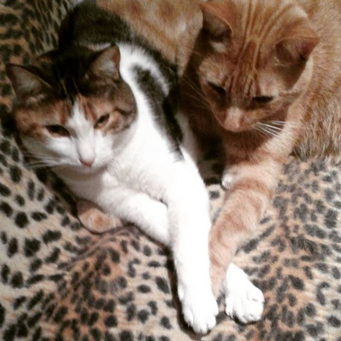 Paws on paws. Mother & son love. Cats Caturday Catoftheday Catsofinstagram Pets Cute Love Furryfriend Saturday Funday Mami Rubio