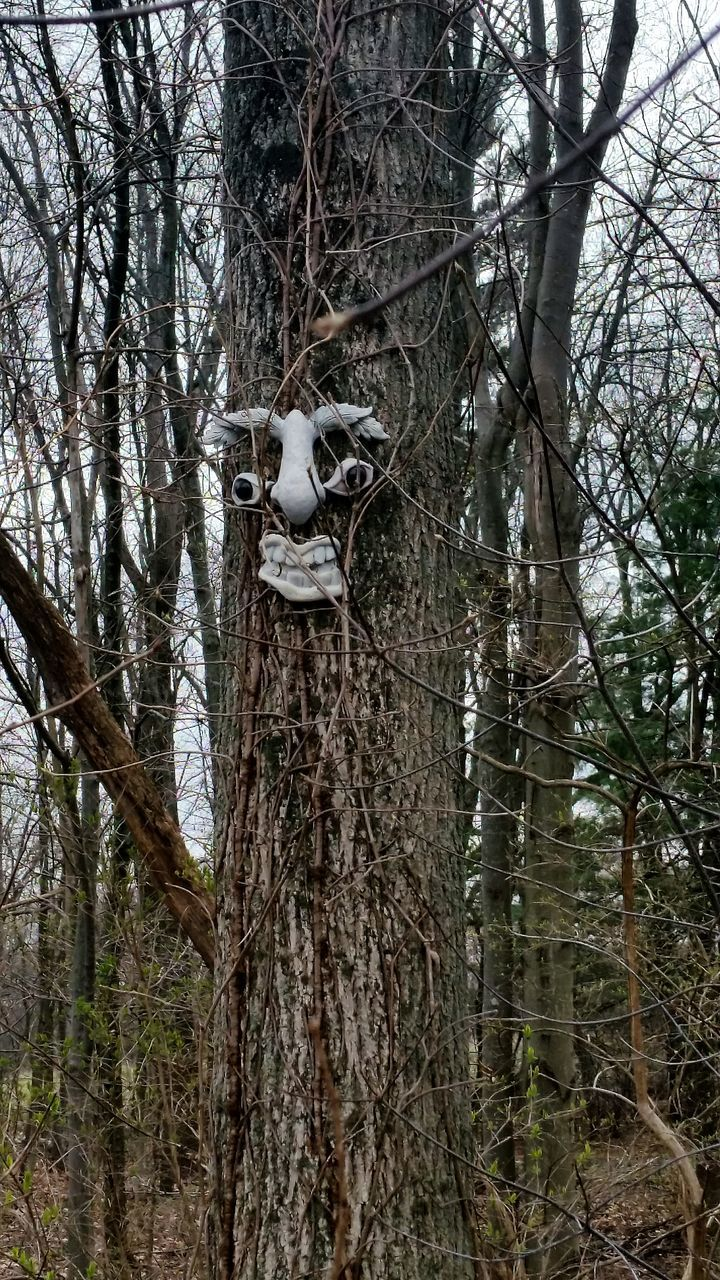 Anthropomorphic Face On Tree Trunk