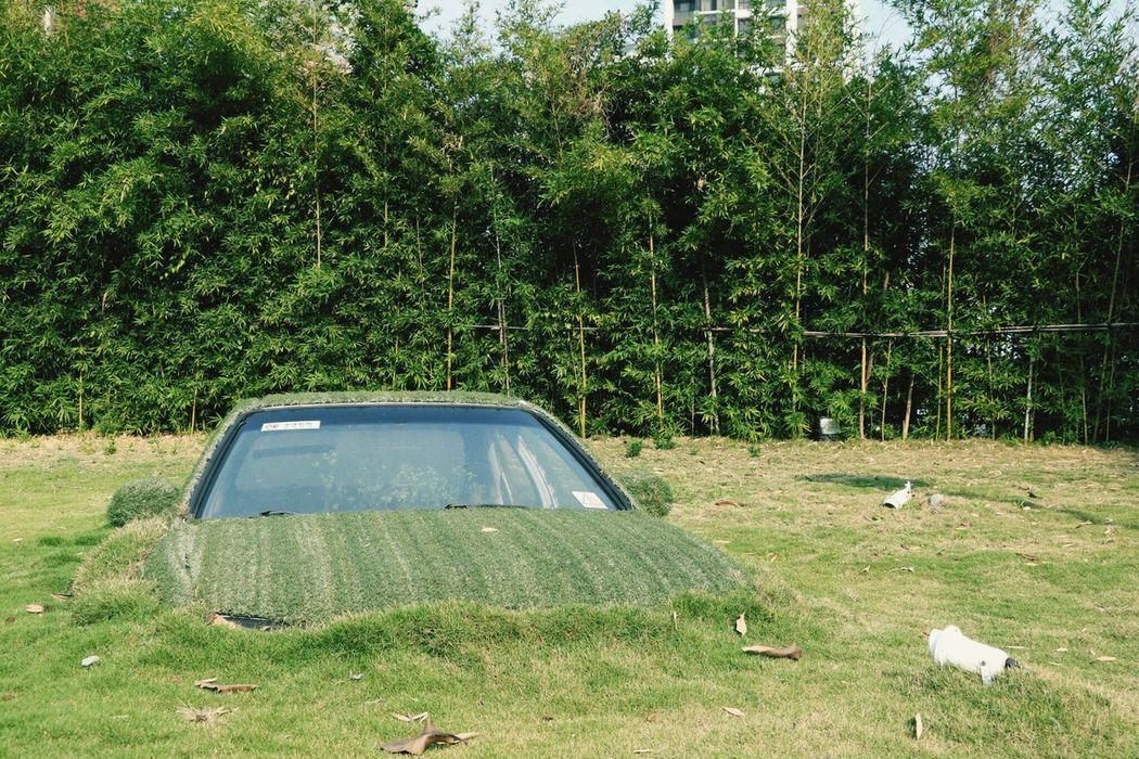 Car Grassland Especially Magical Green Art