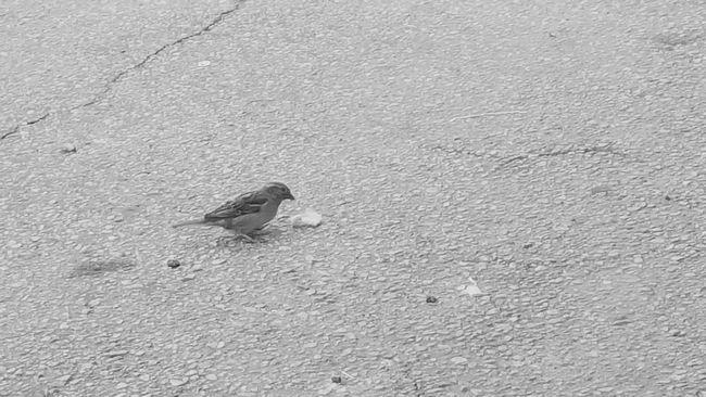 Birds Birds🐦⛅ Birds_collection Birds Of EyeEm  Bird Photography Bird Eating Bird In The City Bird On The Ground EyeEm Best Shots - Nature Samsungphotography Mobile Photography PhonePhotography