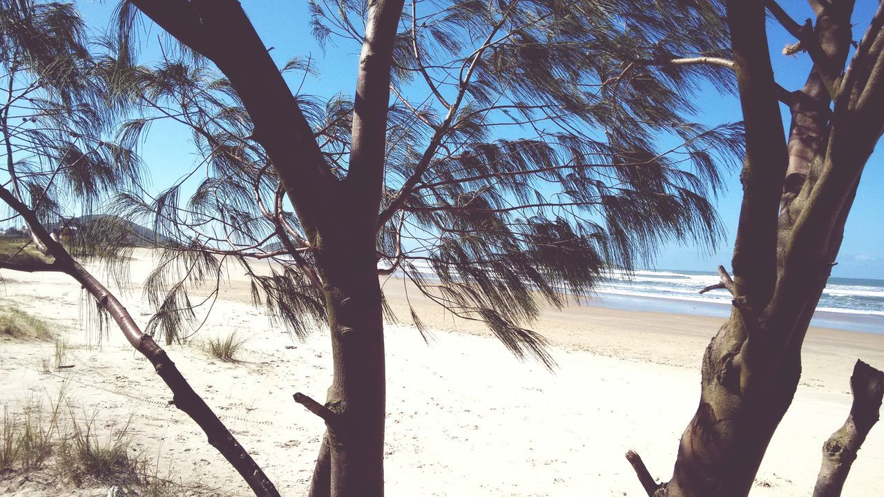 sand, beach, nature, tree, sunlight, sea, day, shadow, beauty in nature, landscape, outdoors, no people, sky