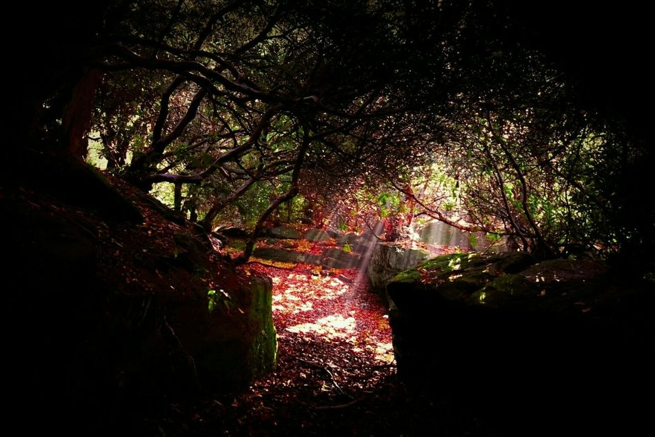 Where Fairies Live. Fairytale  Fairies Goblins Warcraft Pixies Secret Garden Sunrays Trees Enchanted Path Woods Forest Enchanted  Dark Forest