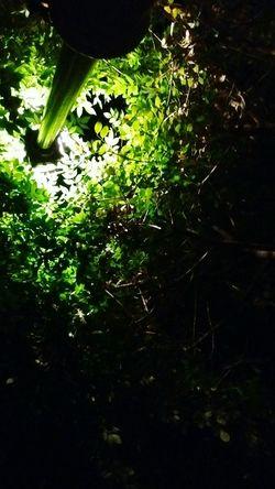 Green Nature Tree Plant Non-urban Scene