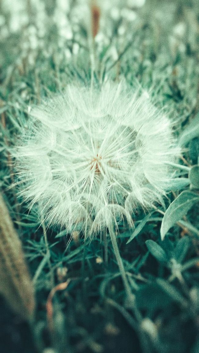 Dandelion Flowers Find Beauty Anywhere You Can Color Of Life River Side Original Experiences Smartphone Photography Walking Around Cool Day With My Dog ^^