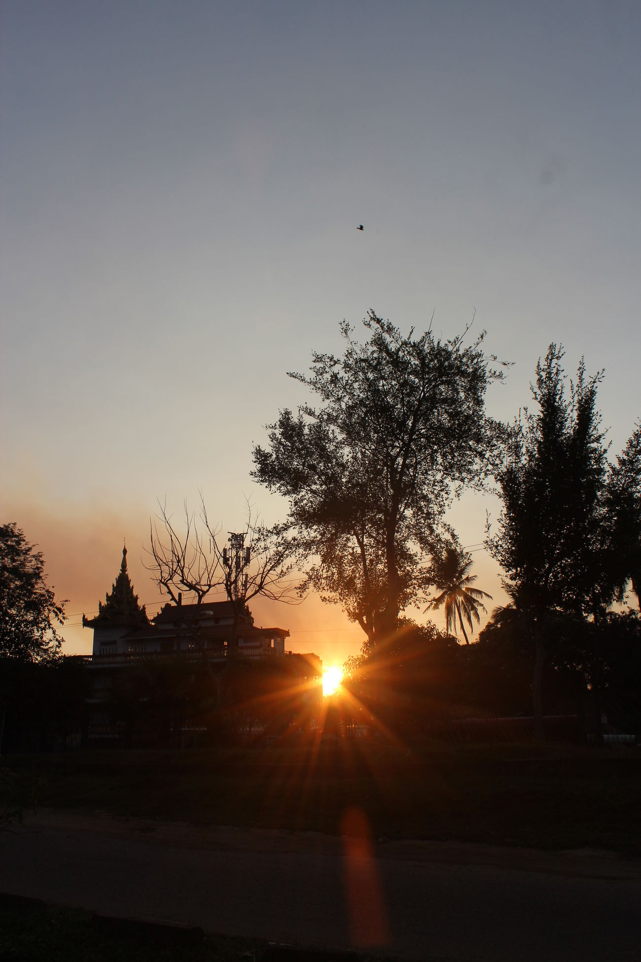 Sunset Sky Sunset_collection Sunlight Through Trees Nature Photography Trees Brunches Monestary Evening Sky Nature_collection from Kandawgyi Park in Yangon, Myanmar