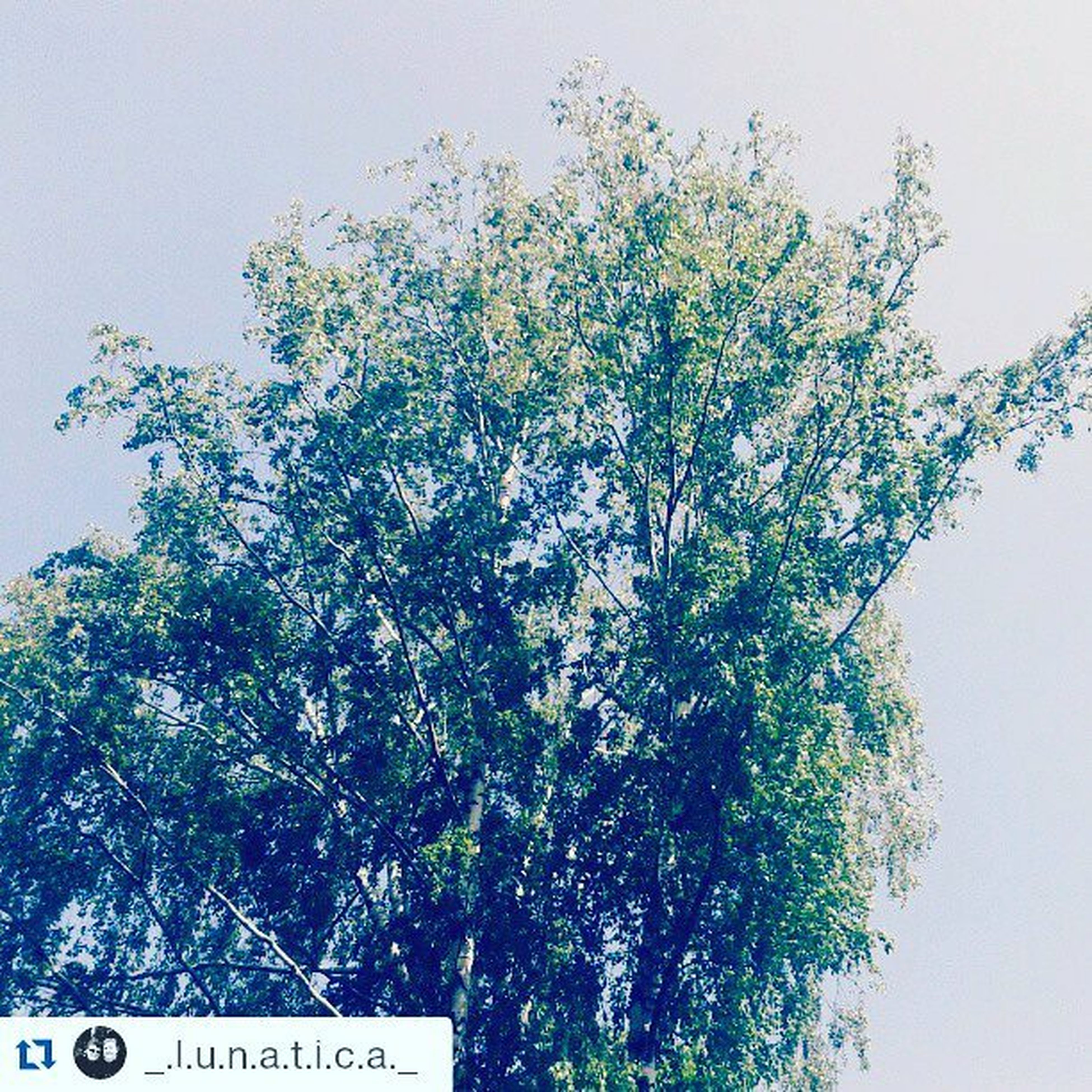 tree, low angle view, text, growth, clear sky, branch, western script, communication, nature, sky, day, high section, beauty in nature, no people, outdoors, flower, copy space, tranquility, non-western script, plant