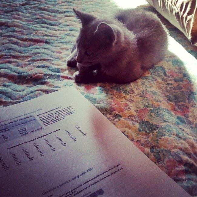 Someone is helping me to Study :) Patologiagenerale Patologia Fisiopatologia pathology studio university università gattino gatto grey kitten cat sweet