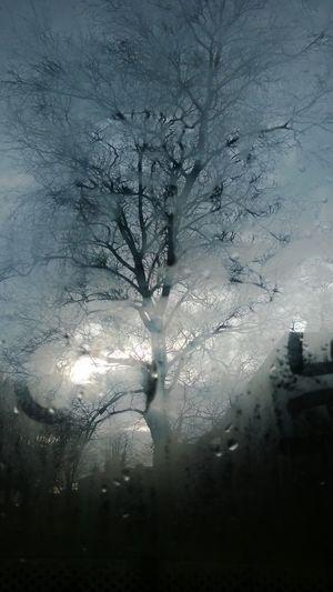 Cold Grey Malinconic Rain Tree Window Winter Winter Tree First Eyeem Photo