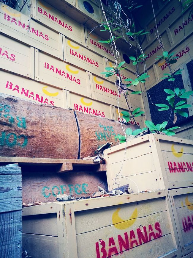 Bananas boxes coffee rainforest Focus On Foreground Rainforest No People Coffee Boxes Bananas Goods Not As It Seems Fake