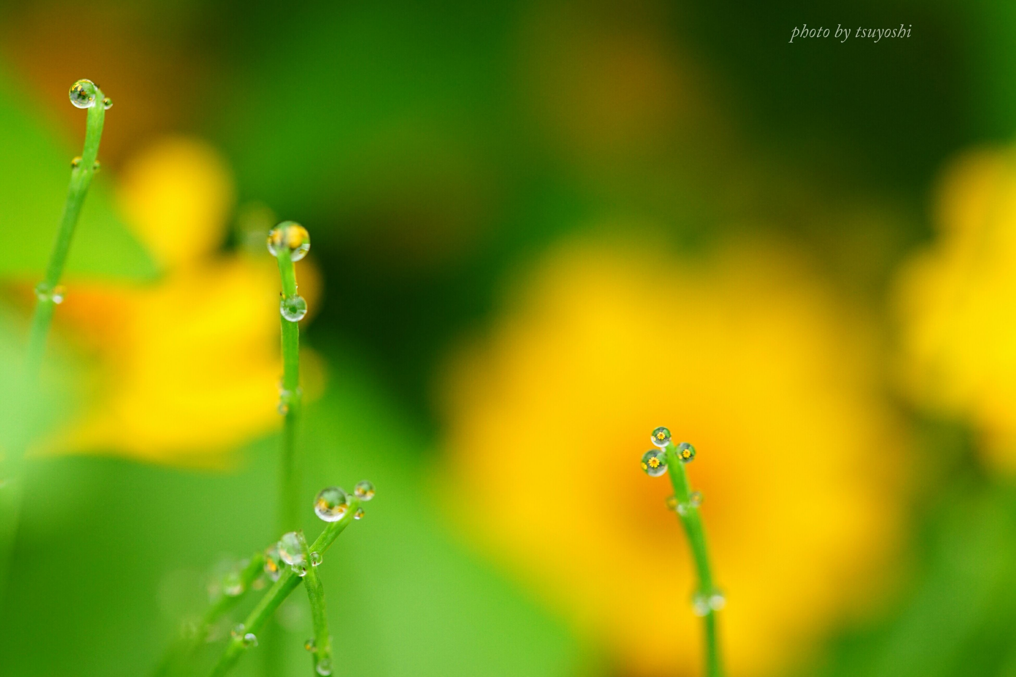 close-up, focus on foreground, plant, growth, fragility, selective focus, nature, drop, beauty in nature, freshness, stem, flower, bud, water, green color, day, outdoors, wet, dew, no people