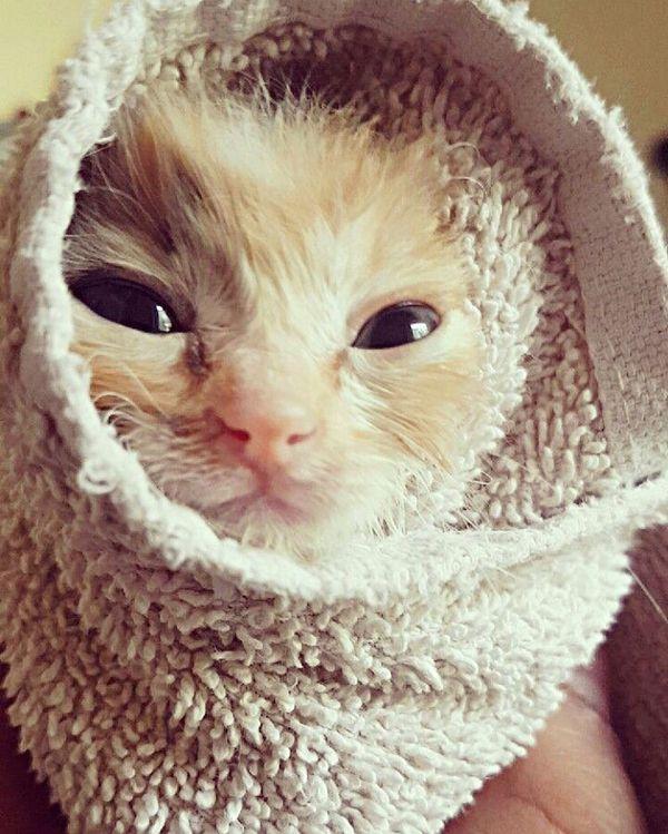 Cat-rrito First Eyeem Photo Cat Kitten Firstbath Cute Pets