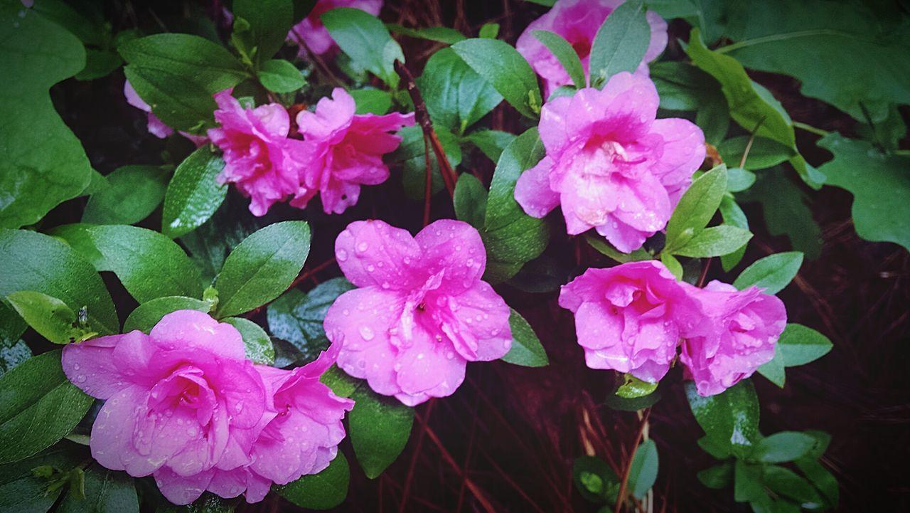 Flowers,Plants & Garden Blooming Flower Springtime Morning Stroll...
