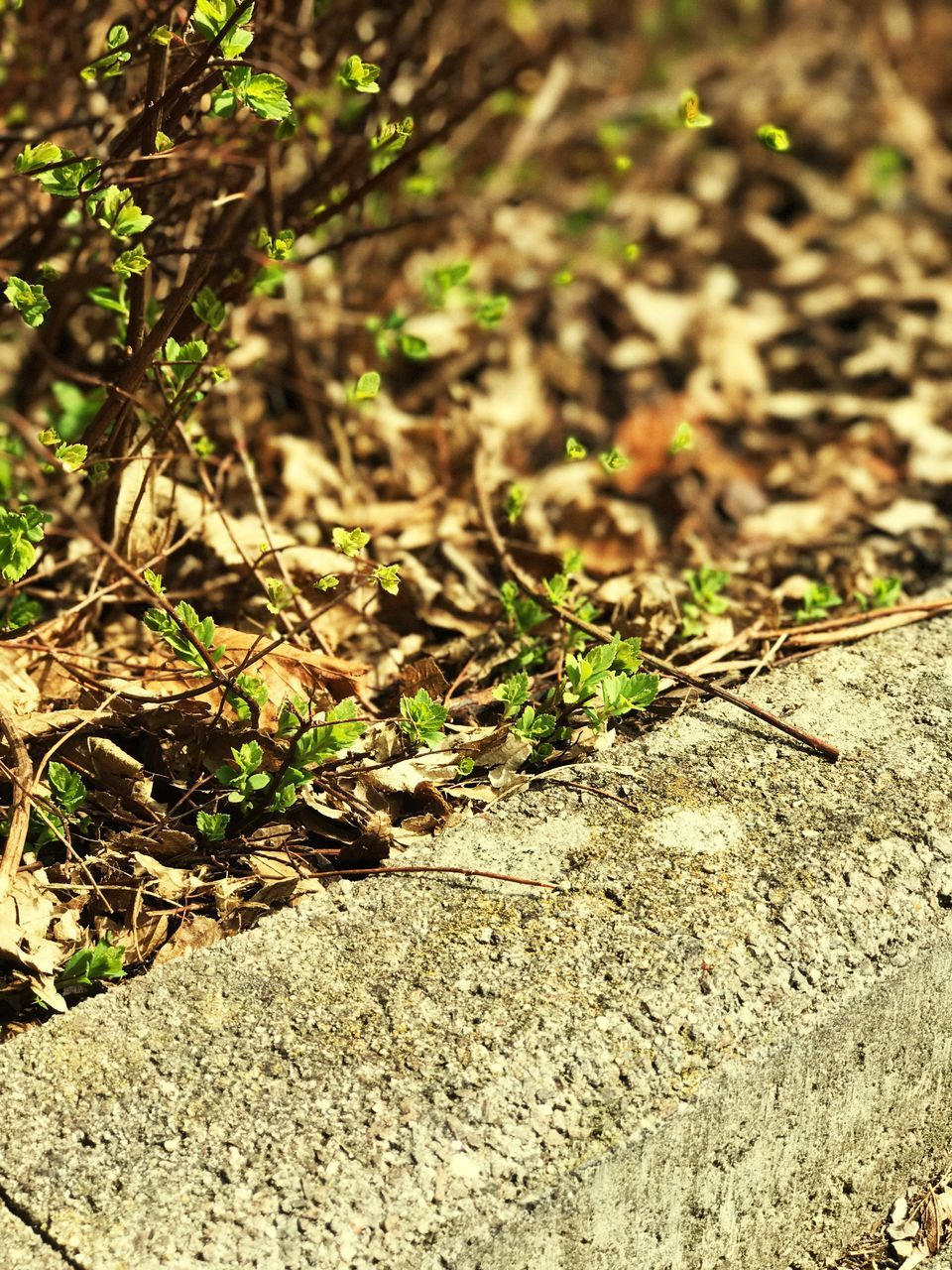 nature, outdoors, no people, day, sunlight, close-up, growth, animal themes
