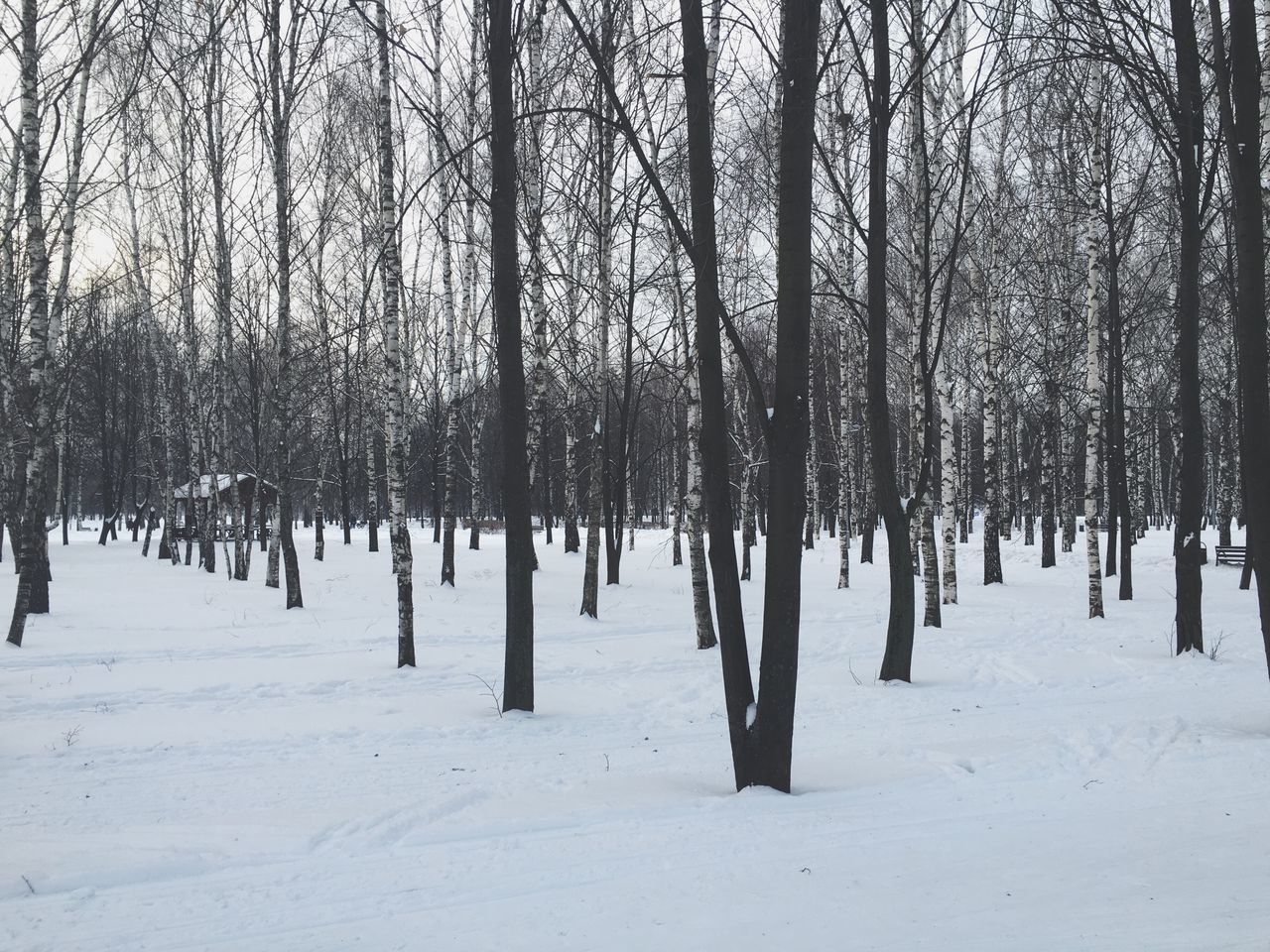 Winter Snow Cold Temperature Tree Bare Tree Nature Scenics Tranquility Day Beauty In Nature Landscape Tranquil Scene No People Outdoors Branch Parks Yauza Moscow Russia 🇷🇺
