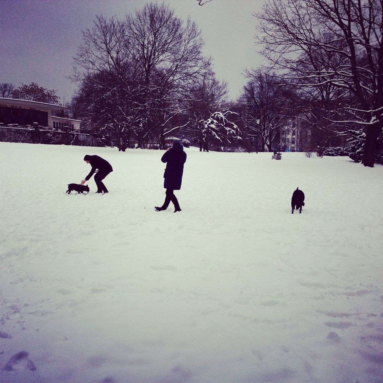 People Playing With Dogs On Snow Covered Field