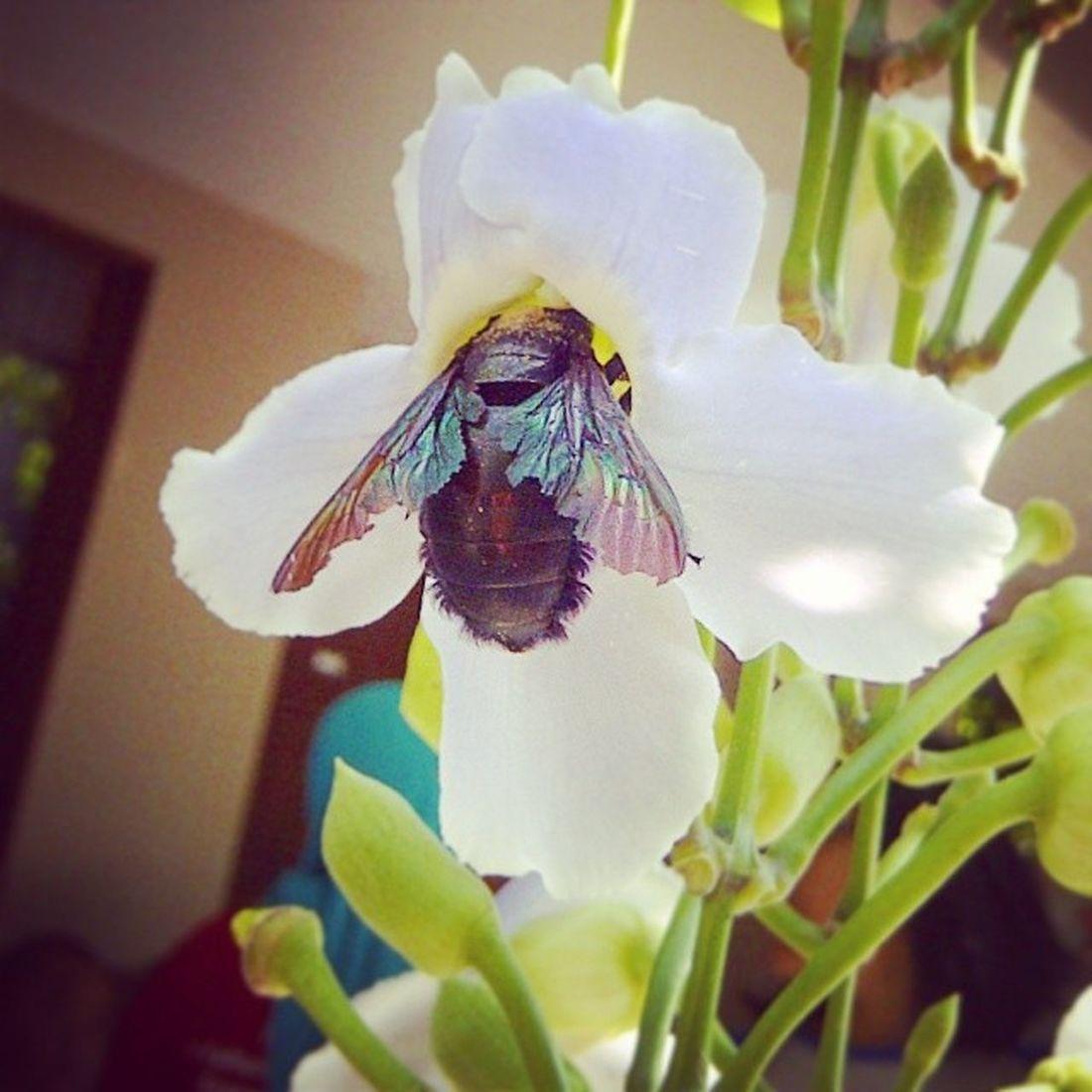 Nature Flower Insect Mutualismsymbiosis Solo CentralJava RumahBatu June twooonefour