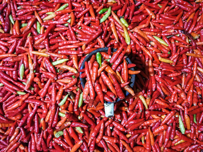 Fresh chili from Sulawesi Indonesia. Chili Pepper Hot Makassar Makassar-Indonesia Sulawesi Sulawesi Selatan Chili  Chili Peppers Food Food And Drink Full Frame Hot Chili Hot Chili Peppers Hot Chillies Indonesia_allshots Makassar In Indonesia Makassarcity No People Red Soroako Sorowako Spice Spices Spices Of The World Sulsel