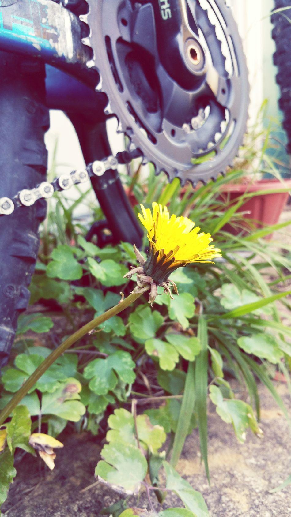 Dandylion Bike Cog