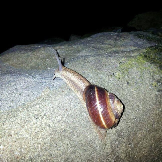 Snail BIG Bulgaria Tryavna Night Rain Nature Mountaines Cold Fun Love Nofilter Bulgariansnail