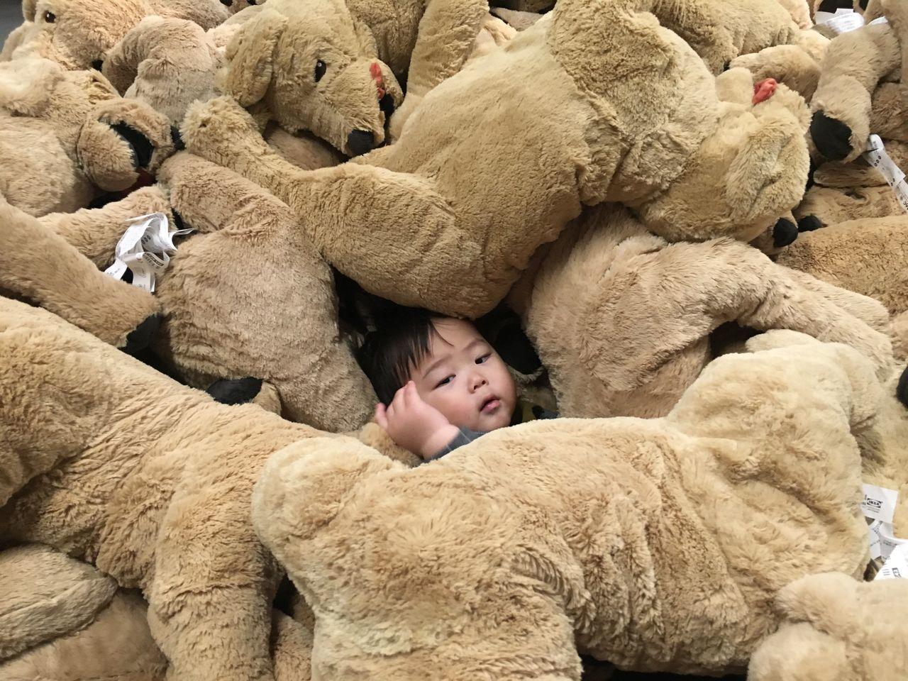 Baby 사진 Suri Snap Photo 스냅 스냅사진 강아지 인형 이케아 IKEA Doll Dogs 설정샷 Gwangmyeong, Korea The Street Photographer The Street Photographer - 2017 EyeEm Awards