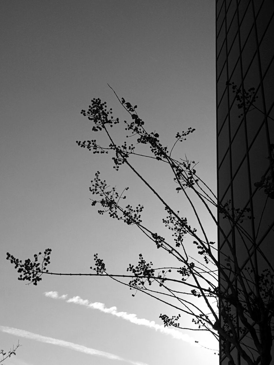 Nature and the city Nature Tree No People Branch Nature Low Angle View Outdoors Beauty In Nature Day Sky City Building Glass Window Winter Orlando Florida Street Architecture City Leonidas Blackandwhite Urban Skyline Downtown Silhouette