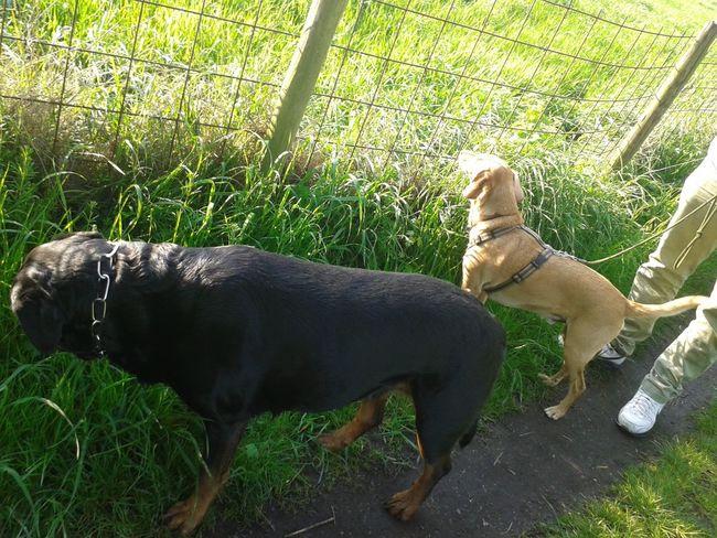 Mit freya und henry Hunderunde Walk With The Dog Unterwegsunddraußen In Deutschland Hunde Dogs Of EyeEm Spazierenmithund