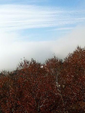 Nice Day Sky Collection Sky Skydream Marcandoladiferencia ☺😊👌✌
