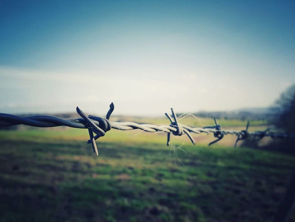 Barbed Wire Outdoors Nature Nature_collection TheGreatOutdoors Wanderlust Landscapes Wales The Great Outdoors Naturelovers Outdoor Photography Countryside Landscape Reflection WoodLand Eyem Nature Nature Tree Nature Photography Selective Focus Eye4photography  Explore Beauty EyeEm Best Edits