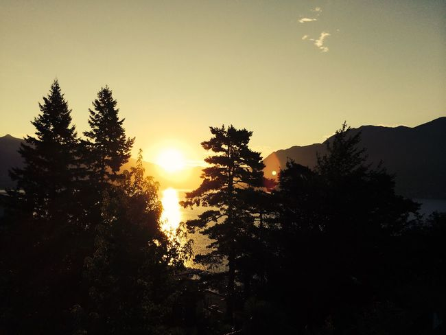 Sunrise Swiss Brissago Tree Sunset Nature Sun Growth Beauty In Nature Scenics Silhouette Sunlight Tranquility Outdoors Sunbeam No People Tranquil Scene Sky Landscape Day