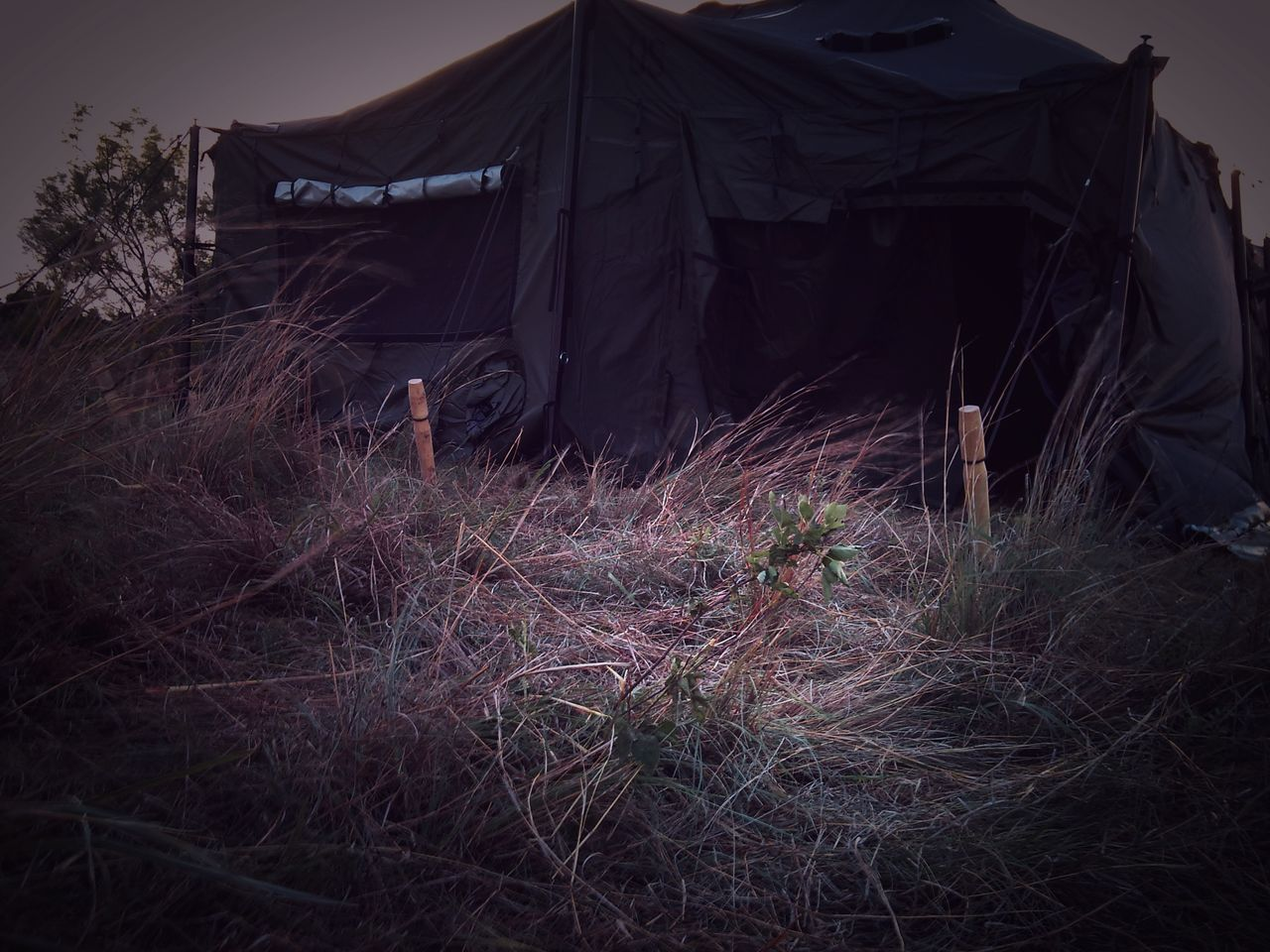 Illuminated No People Tree Outdoors Day Tent Field Problem Grassy Field Army Life Army Camp Field Problem Sunset Back To Basics  Simple Life Roughing It Soldier Living No Ac Training Shelter Survival Pitch Tent Field This Sux Hot Outside