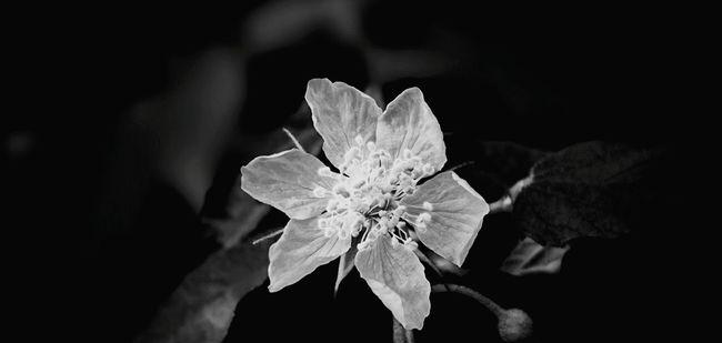 White Flower Flower Black & White Blackandwhite Bwphoto Bwpicoftheday Smartphonephotography Sony Xperia Photography.