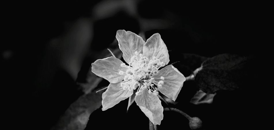 White Flower Flower Black & White Blackandwhite Bwphoto Bwpicoftheday Smartphonephotography Sony Xperia Photography.