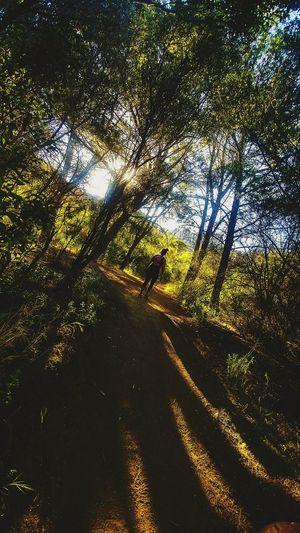 Meditation💆 Nature Outdoors Silhouette Tree Day Shadow Beauty In Nature Sky Santamonica VSCO Cam California Love VSCO EyeEm Malibu Beach Nature Eyeemvision Hikingadventures Fit Instagood