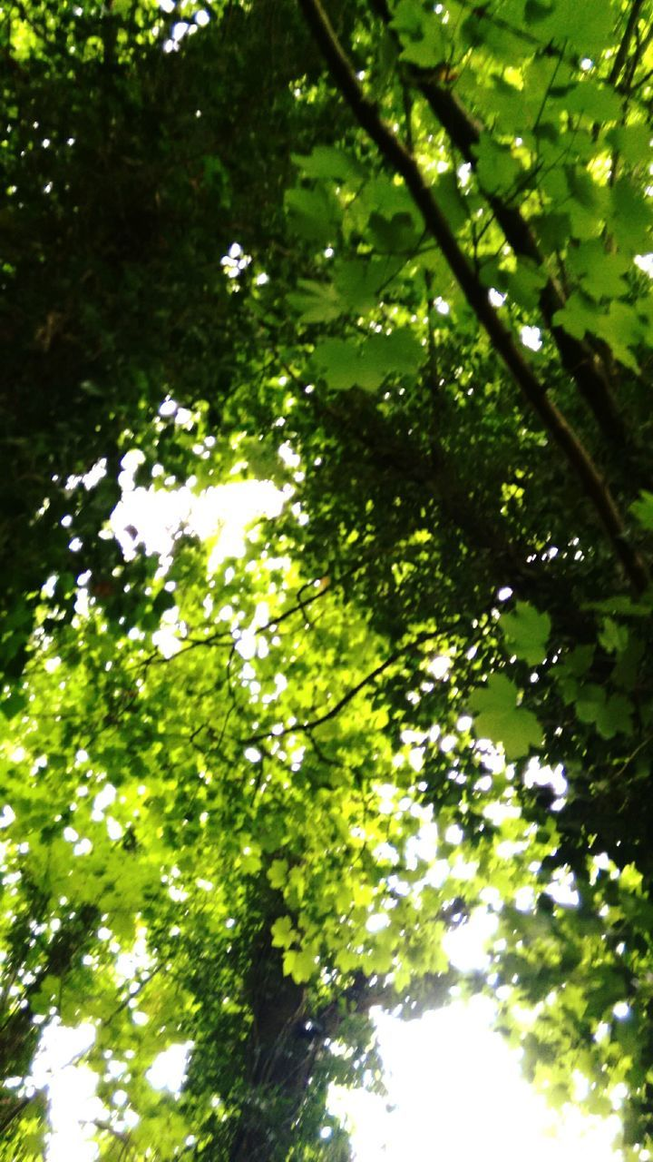 tree, growth, nature, green color, beauty in nature, branch, low angle view, no people, tranquility, outdoors, day, leaf, freshness, water