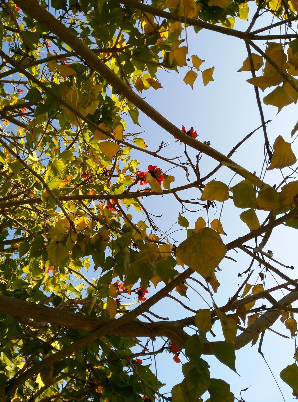 tree, low angle view, growth, branch, leaf, day, nature, beauty in nature, outdoors, no people, autumn, freshness, sky, close-up