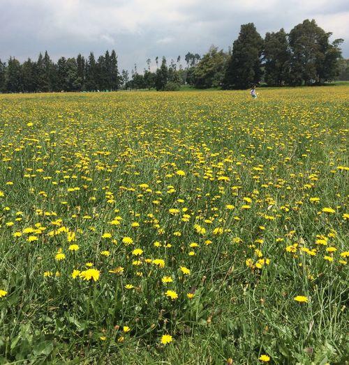 Flowers, Landscape 1540