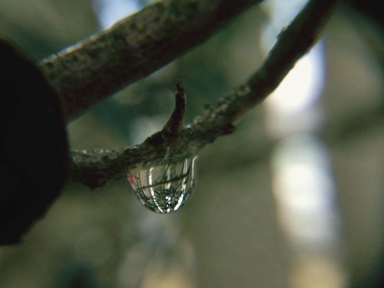 Japan EyeEm 2015 TAMROM Nikon D5200 Rain Drops 雫