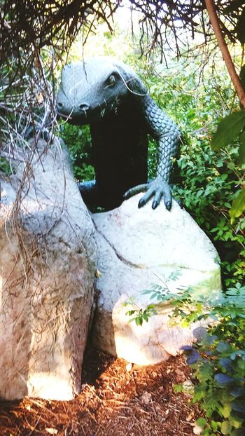 Lizard rocks Bushes Check This Out Taking Photos Giant