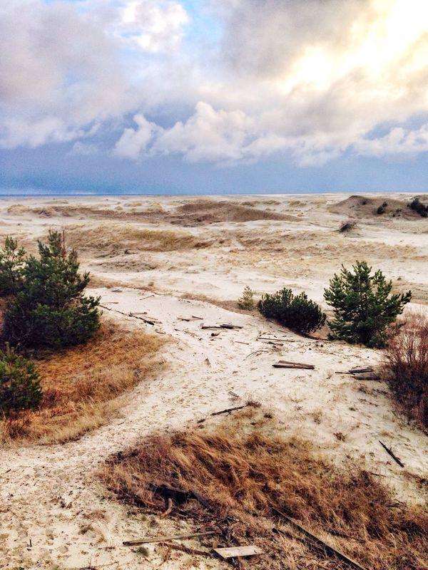 Winter Nature Sea Sky Beach Cloud - Sky Horizon Over Water Water Sand Tree Curonian Spit Russia Kaliningrad