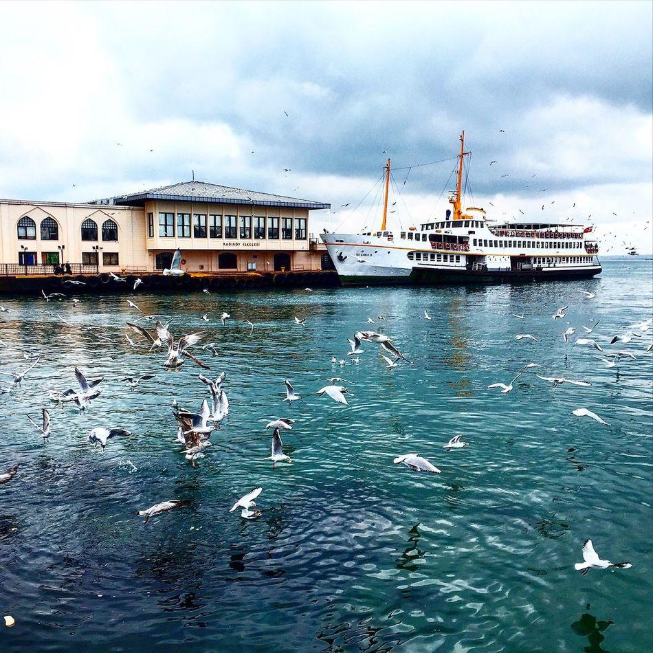Beautiful stock photos of istanbul, animal themes, bird, water, nautical vessel