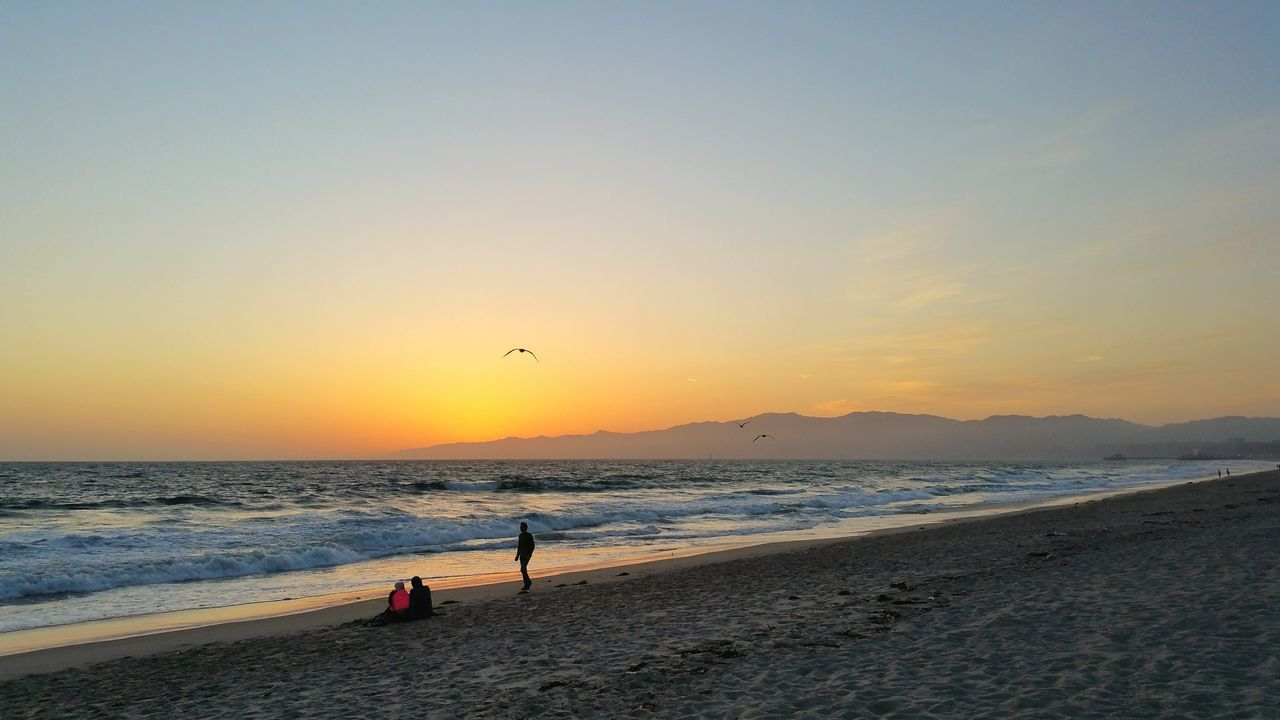 Beautiful stock photos of los angeles, Back Lit, Beach, Beauty In Nature, Bird