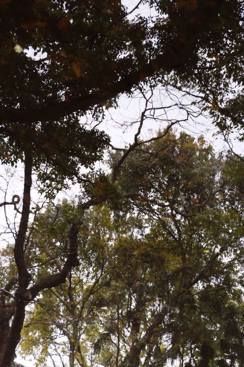 tree, low angle view, growth, nature, branch, no people, beauty in nature, day, forest, outdoors, sky