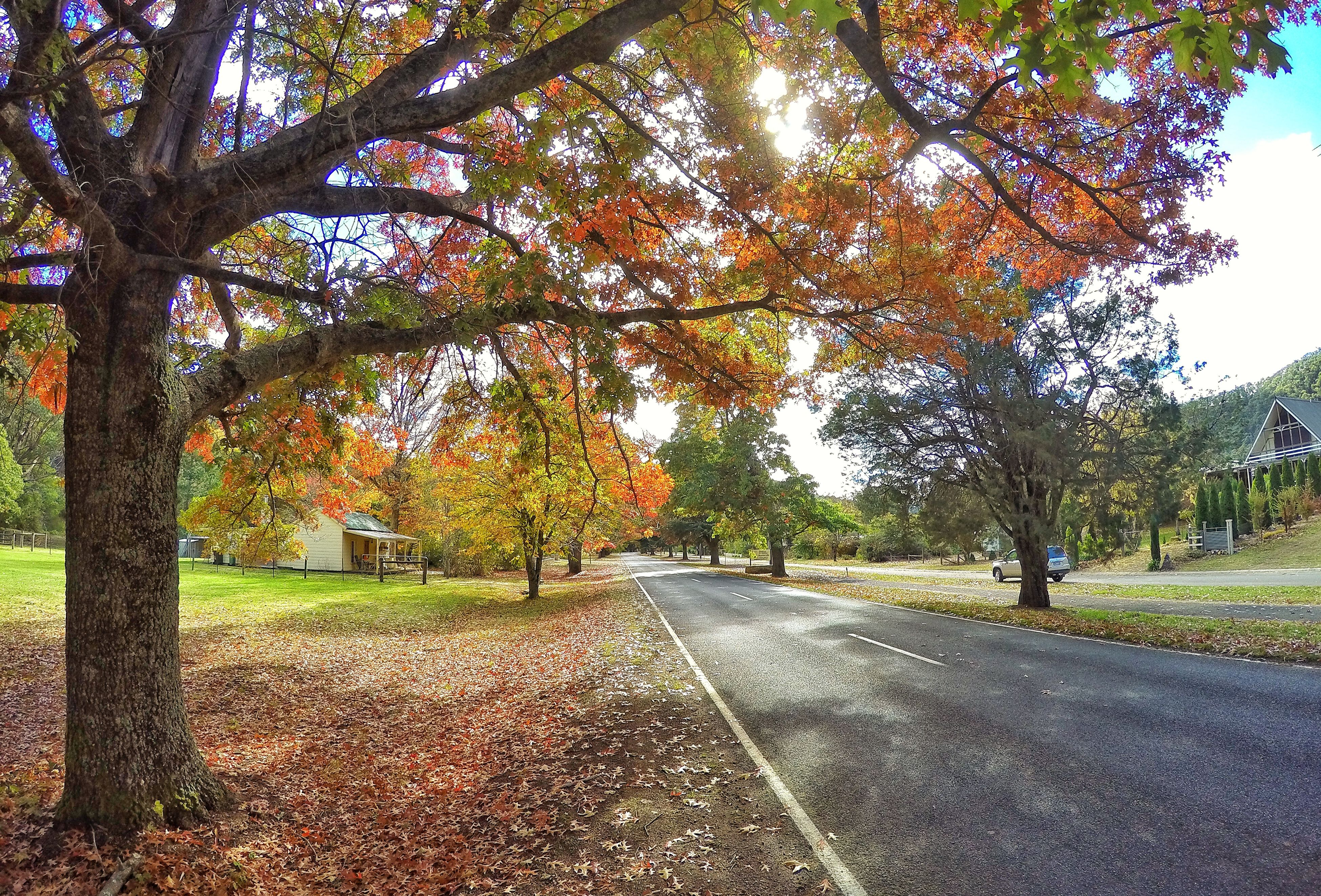 tree, the way forward, road, transportation, tranquility, growth, autumn, nature, diminishing perspective, branch, tranquil scene, beauty in nature, change, vanishing point, scenics, street, empty road, sunlight, day, sky
