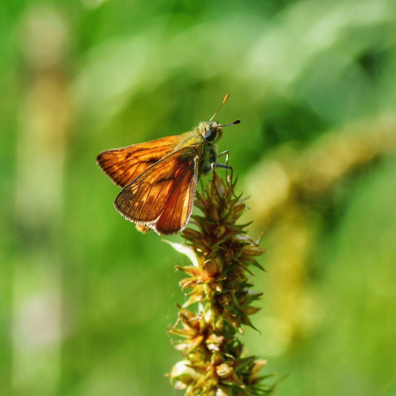 #macro #flowers #macrophotography #sigma #sigma105mm #firenze #travel #nikond500 #nikon #nital #mantis #nikonofficial #special-shot #ig-worldclub #nikonitalia #ig_italiy #igers #mynikonlife #eartpix #1x5 #nikongear #natgeotravelpic #natgeo #thebest_capture #macro_spotlight #igbest_shotz #mynikonshots #parcodellapiana #nikonromania #f64