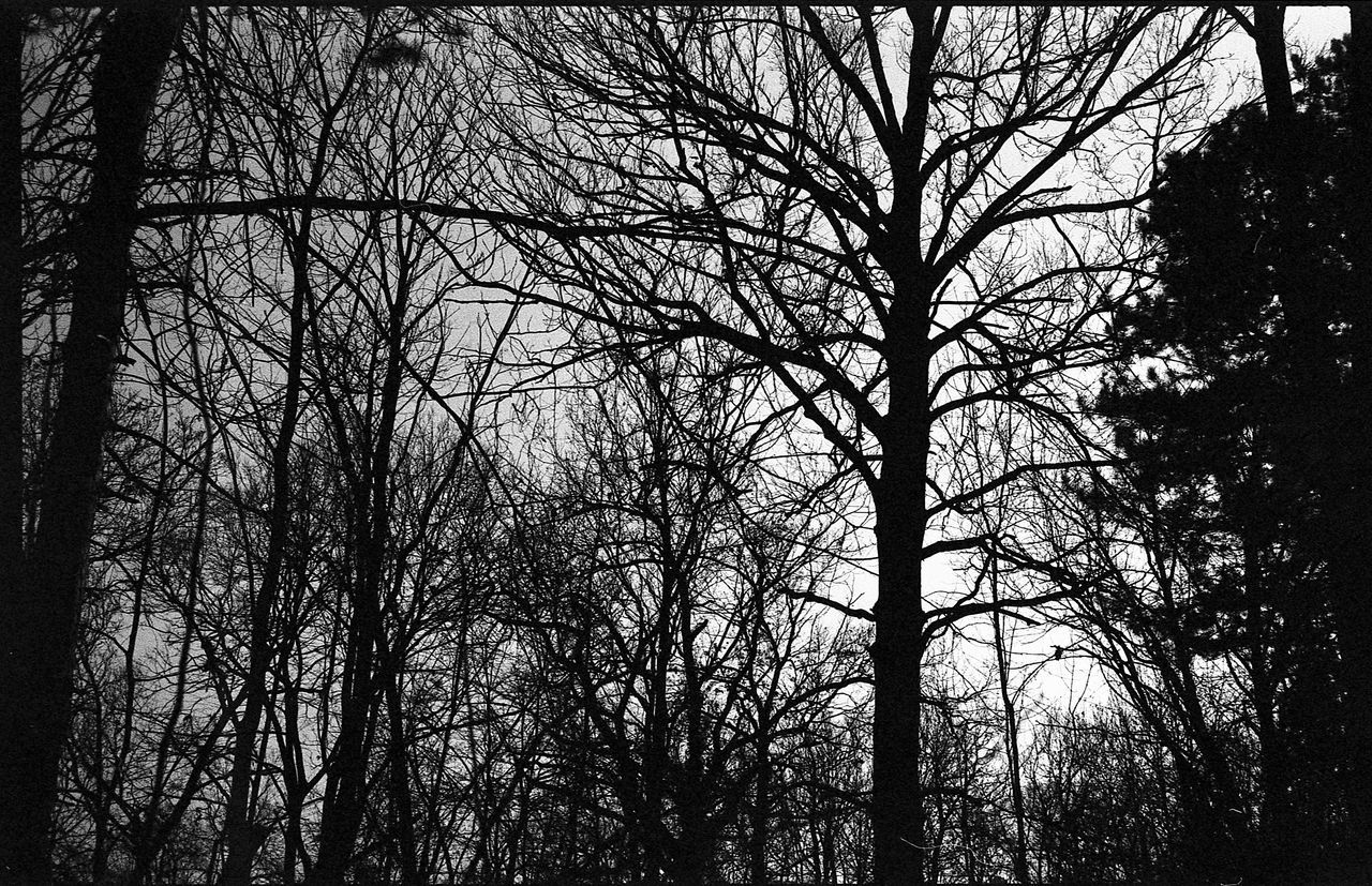 35mmfilmphotography Analog Photography Analogue Analogue Photography Black Black And White Black And White Photography Day Film Photography Filmisnotdead Landscape Landscape_Collection Nature Nature Photography No People