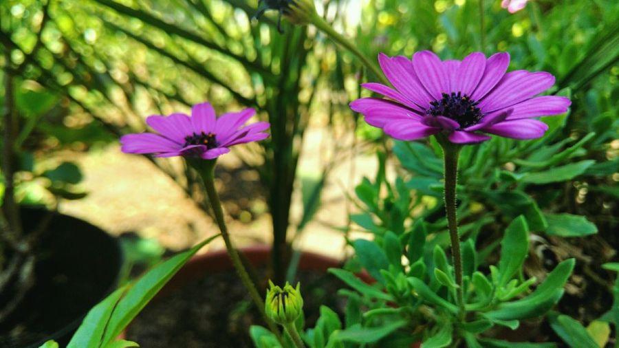 Mi inspiracion en una Flor... Flowers Flower Flowerporn Purple Flower Nature First Eyeem Photo