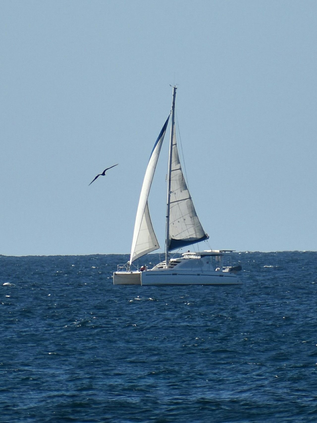Sea Sailing Nautical Vessel Sailboat Blue Water Sailing Ship Travel Sky Vacations Nature Horizon Over Water Summer Floating On Water Clear Sky Day Outdoors Wave Yachting No People